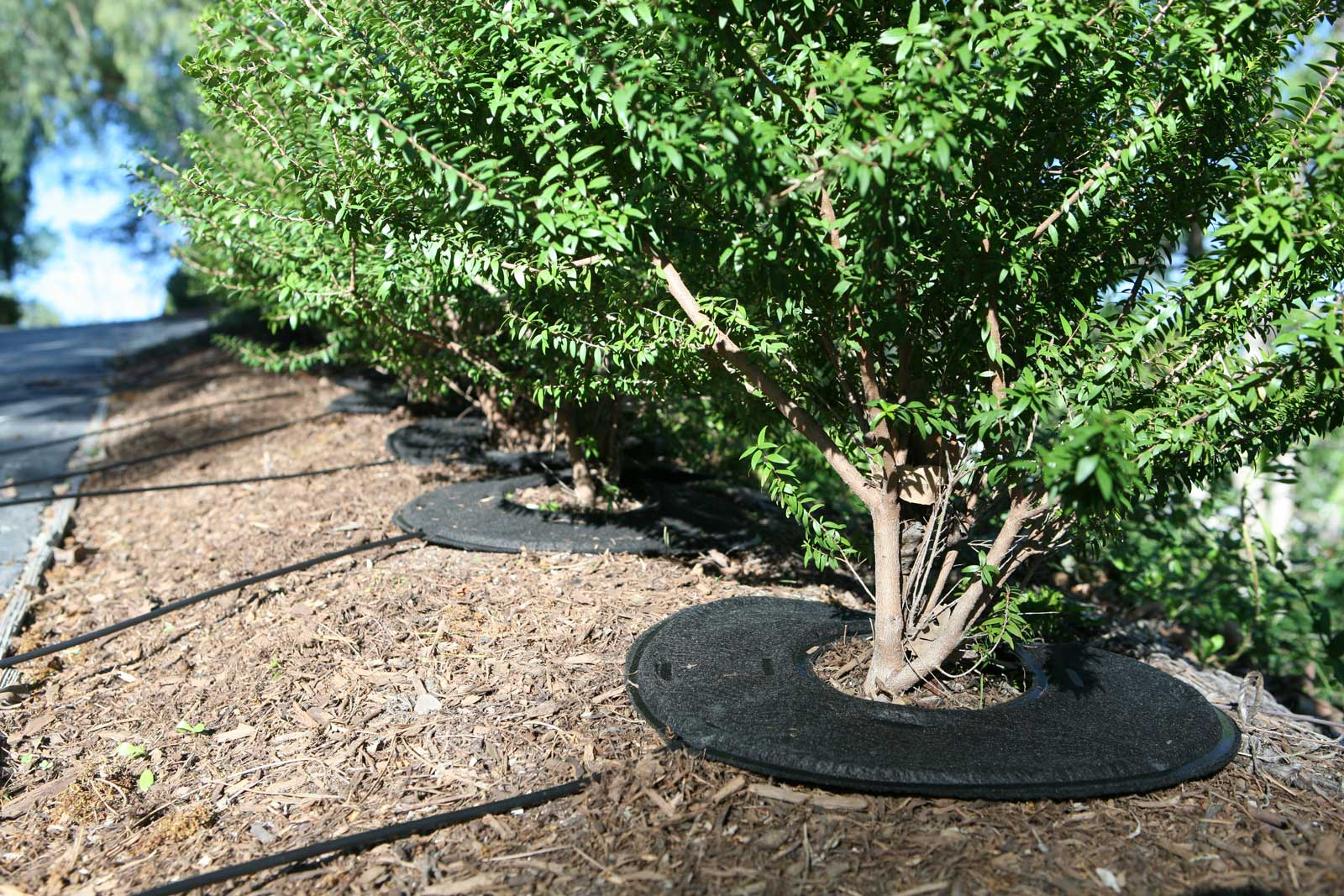 Compared to other irrigation methods, RootWise™ can save up to 80 percent water.